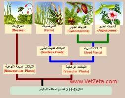 مملكة النبات